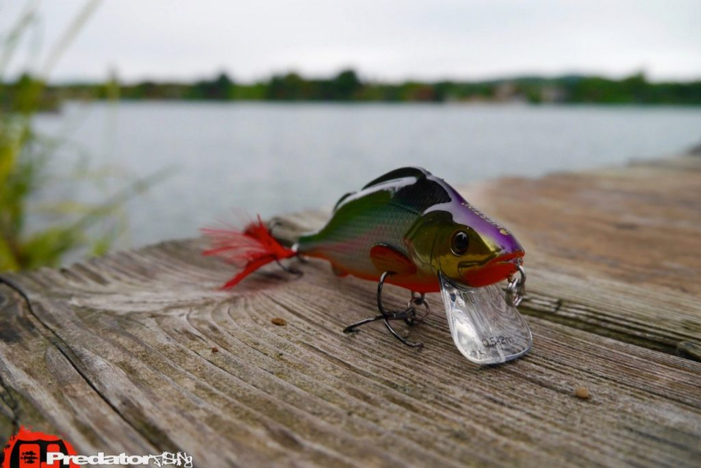 Westinfishing-Percy-the-Perch-HL