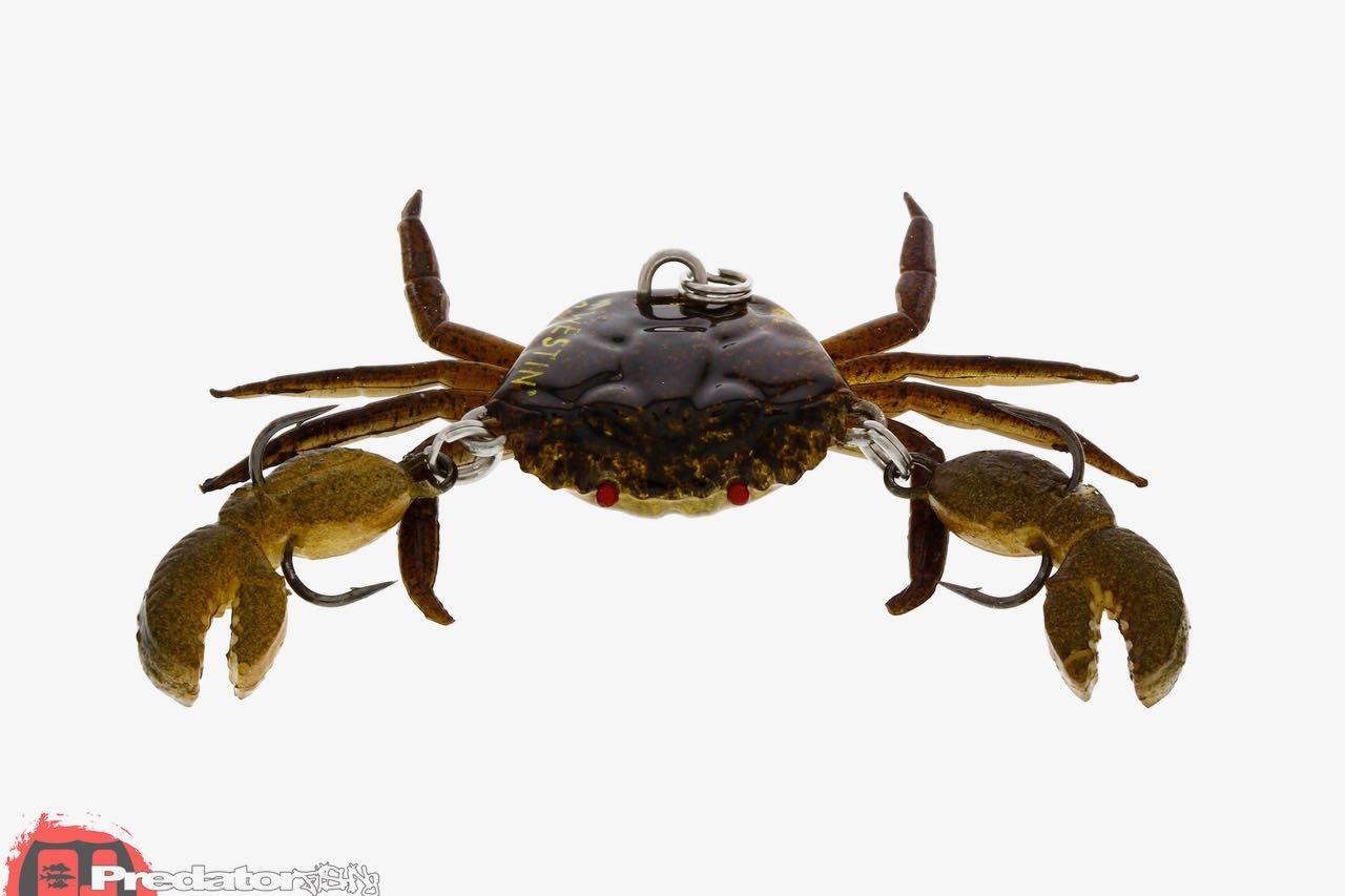 Westin News Frühjahr 2017 Coco the Crab
