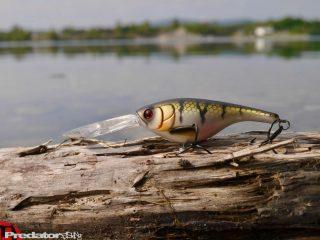 Westin BabyBite DR Crankbait Westinfishing